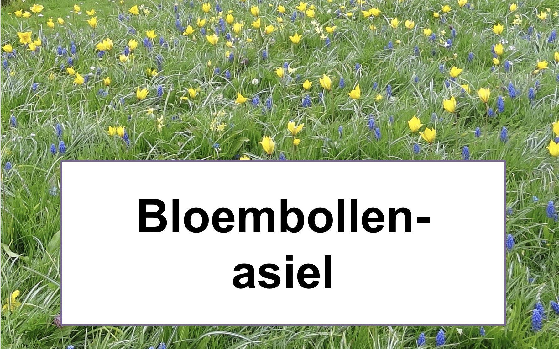 foto bloembollen in gras